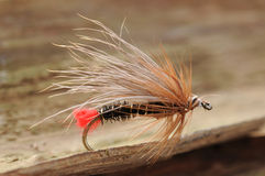 Hairy fish fly. Small hairy fish fly on a wooden background Stock Image