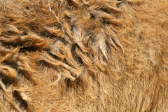 Hairy fur. Of a mammal Stock Images