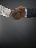 Hairy handshake. Against gray background Royalty Free Stock Image