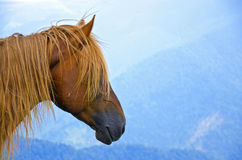 Hairy horse head on a bluish mountain landscape Royalty Free Stock Image