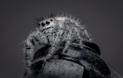 A Hairy Jumping spider sitting on a metal nut Stock Photography