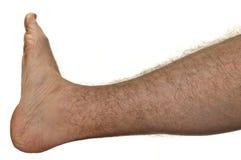 Hairy leg. One mans hairy leg isolated on white background Stock Photography