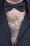 Hairy male chest. A sexy hairy male chest with a bow-tie around the neck Stock Image