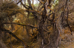 Hairy Old Undergrowth. Sometime you have to look under ther green bush to see this amazing undergrowth Stock Photo