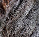 Hairy palm tree bark up close Royalty Free Stock Photos