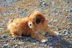 Hairy puppy Stock Images