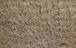 Hairy rug texture Stock Image