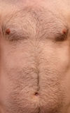 Hairy skin background. Close up background of a male chest with hair Royalty Free Stock Photos