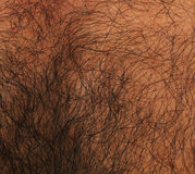 Hairy Skin Royalty Free Stock Photography