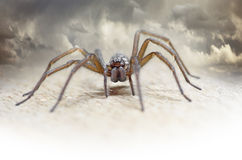 Hairy spider Royalty Free Stock Photos