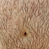 Hairy stomach. Stock Images