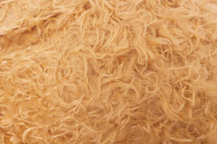 Hairy texture Royalty Free Stock Photography