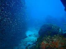 haj för grotta ii s Royaltyfri Fotografi