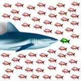 haj för rött hav för egypt fisk Royaltyfria Bilder