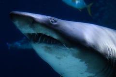 Haj i akvariet för havsliv i Bangkok royaltyfria foton