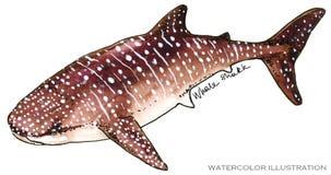 haj undervattens- livstid illustration för vattenfärg för havsdjur vektor illustrationer