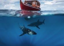 Hajar under fartyget i havet Royaltyfri Bild
