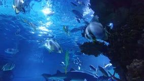Hajbehållare med ljus ilsken blick och hajar stock video