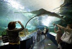 Hajbehållare på Ripleys akvarium Kanada Arkivfoton