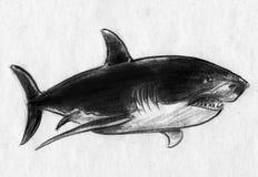 Hajen skissar Fotografering för Bildbyråer