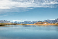 Hakatere Conservation  Reserve, Canterbury, New Zealand Stock Images