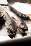 Hake. Fresh hake for sale in a market Stock Photos