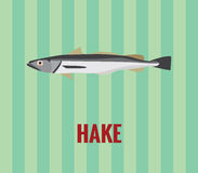 Hake - drawing on green background. Royalty Free Stock Image