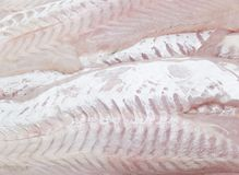 Hake fillet Stock Images