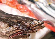 Hake fish exposed on market stand. Hake fish species to be sold exposed on a fish market in the Spanish island of Mallorca stock images