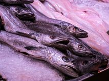 Hake fish on ice at a fish market. In Ireland royalty free stock photo