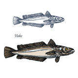 Hake fish, seafood isolated sketch for food design Royalty Free Stock Images