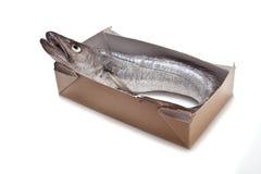 Hake fish whole. stock photos
