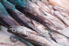 Hake fishes at fish market. Raw and fresh brilliant fishes Stock Photos