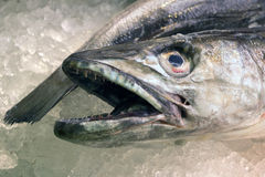 Hake Stock Photo