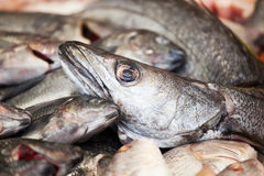 Hake and other fishes Royalty Free Stock Images