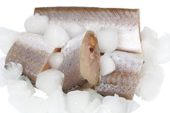 Hake raw slices with ice cubes Stock Photo