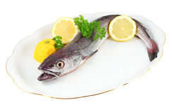 Hake small Royalty Free Stock Image
