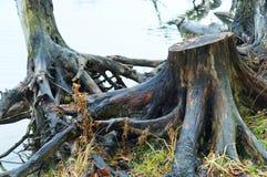 Haken Sie das alte Holz, das gefährlich aus dem Wasser heraus haftet Stockfoto