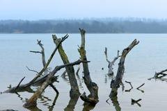 Haken Sie das alte Holz, das gefährlich aus dem Wasser heraus haftet Lizenzfreie Stockbilder