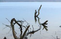 Haken Sie das alte Holz, das gefährlich aus dem Wasser heraus haftet Lizenzfreie Stockfotografie