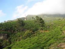 Hakgala Tea garden in Sri Lanka. At this morning time stock photo