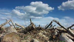 Hakkend hout stock footage