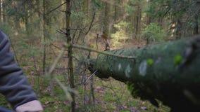 Hakkend hout met een bijl stock footage