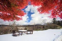 Hakkoda Mountains Royalty Free Stock Photos