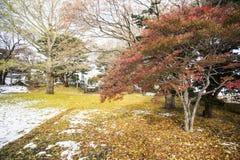Hakodate autumn season with snow Stock Photo