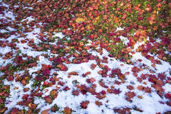 Hakodate autumn season with snow Royalty Free Stock Photography