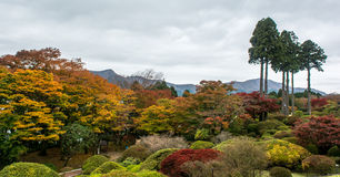 Hakone in Autumn. Colorful leaf and tree in japan : Kouyou Stock Photos