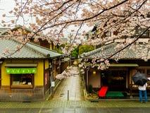 HAKONE, JAPÃO - 2 DE JULHO DE 2017: Distrito de Higashiyama com flores de cerejeira a primavera em Kyoto Imagem de Stock