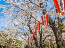 HAKONE, JAPAN - JULI 02, 2017: De Japanessebrieven in rode en witte lantaarns met een mooie meningskers komt tot bloei Royalty-vrije Stock Fotografie