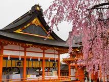 HAKONE, JAPAN - JULI 02, 2017: De toneelmening van mooie kers komt Sakura in majestueuze kiyomizu-Dera, beroemd tot bloei Royalty-vrije Stock Fotografie
